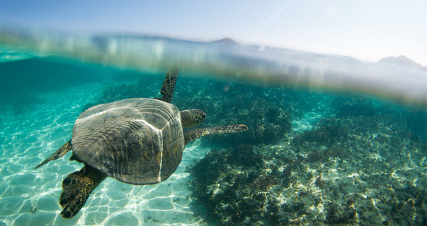 Support the Sea Turtle Conservancy