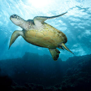 photo-turtle-belly-136712569-a