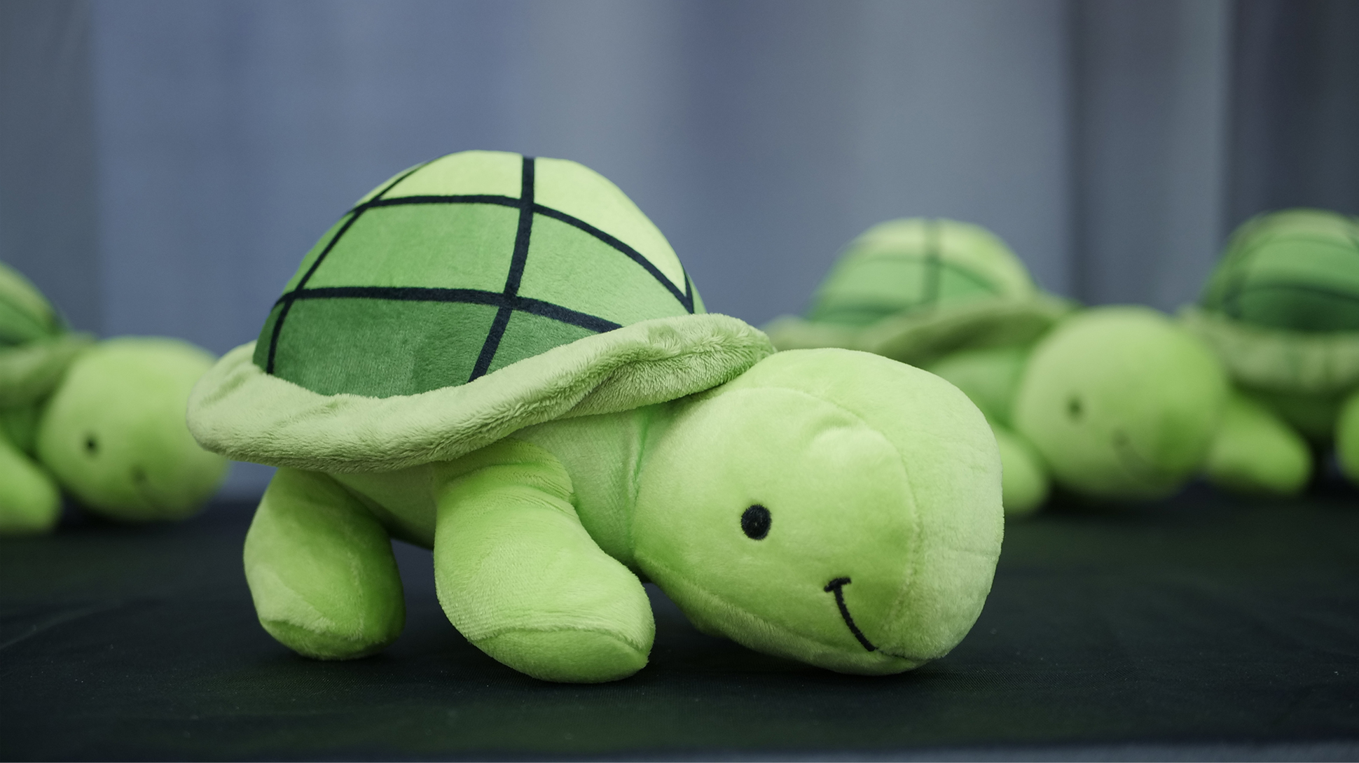green stuffed turtle